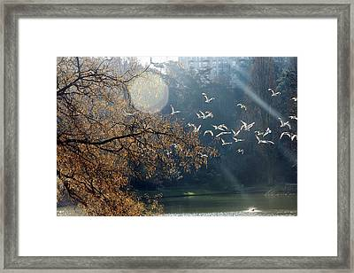 Paris, Buttes Chaumont Framed Print by Calinore