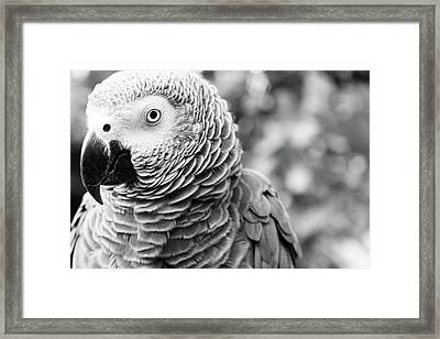Parrot Framed Print by Fine Arts