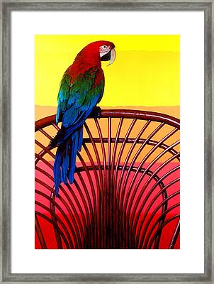Parrot Sitting On Chair Framed Print by Garry Gay