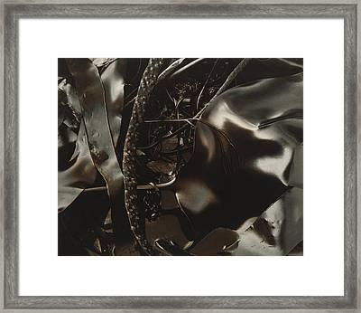 Part Of Plant Against Silk Framed Print by Elspeth Ross