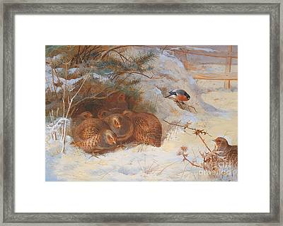 Partridge And A Bullfinch In The Snow  Framed Print by Archibald Thorburn