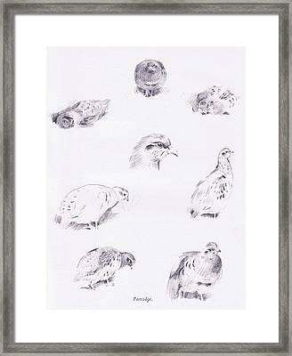 Partridges Framed Print by Archibald Thorburn
