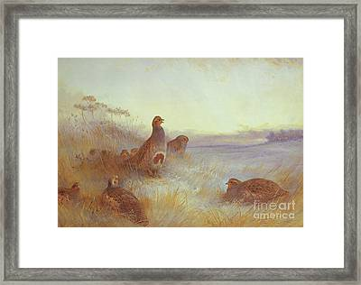 Partridges In Early Morning Framed Print by Archibald Thorburn