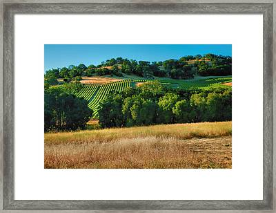 Paso Robles Vineyard Framed Print by Steven Ainsworth