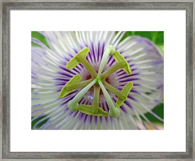 Passion Flower Framed Print by Juergen Roth