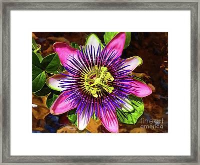Passion Flower Framed Print by Mariola Bitner