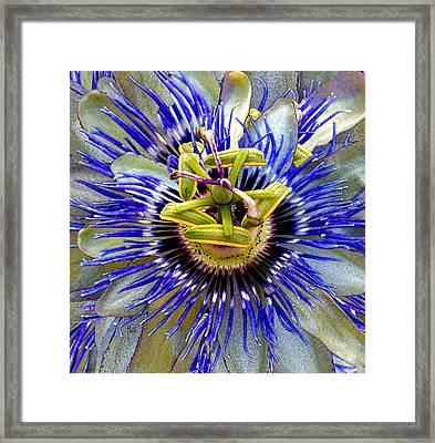 Passion Flower Framed Print by Michele Avanti