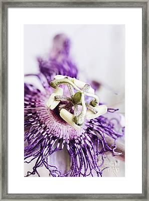 Passion Flower Framed Print by Stephanie Frey