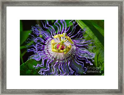 Passionflower Spiritual Art Framed Print by Robyn King
