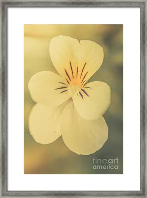 Pastel Pansy Framed Print by Jorgo Photography - Wall Art Gallery