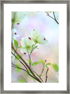 Pastel Spring Framed Print by Andrea Kappler
