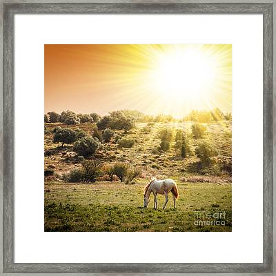 Pasturing Horse Framed Print by Carlos Caetano