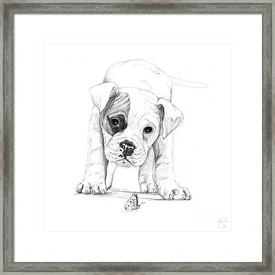 Patch A Boxer Puppy Framed Print by Stacey May
