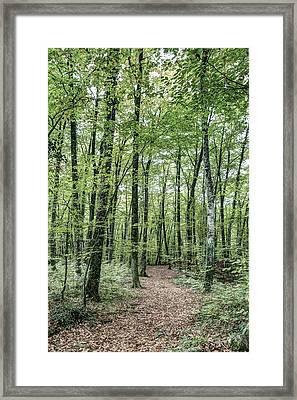 Path Between Trees Framed Print by Marc Garrido
