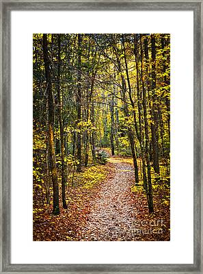 Path In Fall Forest Framed Print by Elena Elisseeva