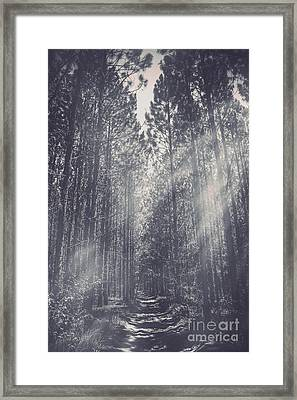 Path Leading Through Mysterious Woodlands Framed Print by Jorgo Photography - Wall Art Gallery