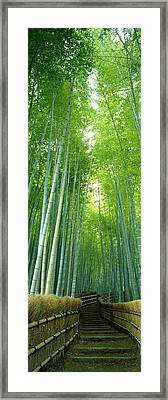 Path Through Bamboo Forest Kyoto Japan Framed Print by Panoramic Images