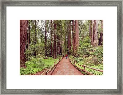 Path Through The Bohemian Grove At Muir Woods National Monument - Marin County California Framed Print by Silvio Ligutti