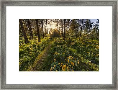 Path To The Golden Light Framed Print by Mark Kiver