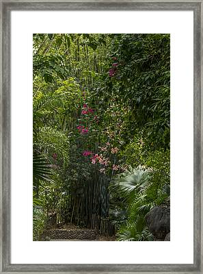 Path With Flowers Framed Print by Tito Santiago
