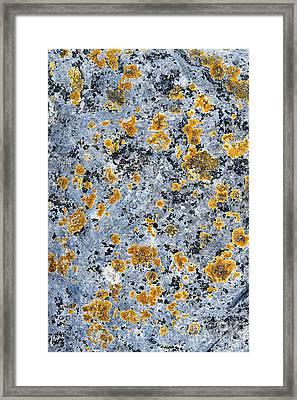 Pattern In Lichen  Framed Print by Tim Gainey