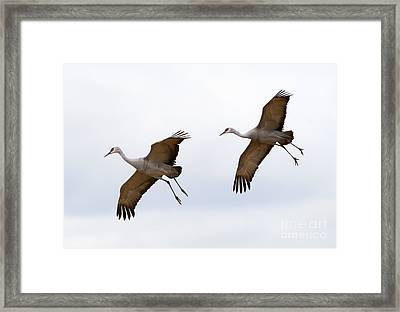 Pattern Of Two Framed Print by Mike Dawson