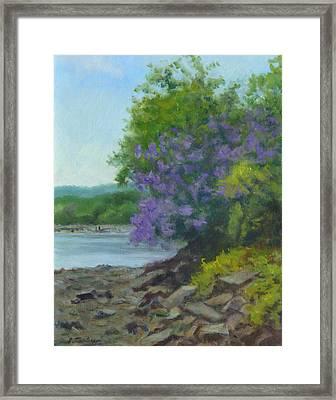 Paulownia At Water's Edge Framed Print by Phyllis Tarlow