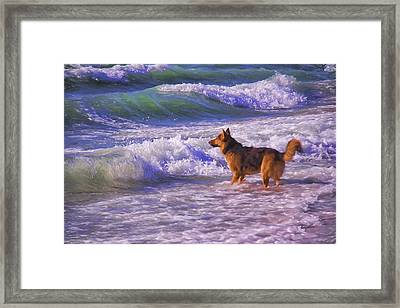 Pawing The Waves Framed Print by Daphne Sampson