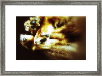 Paws For Thought Framed Print by Isabella Abbie Shores