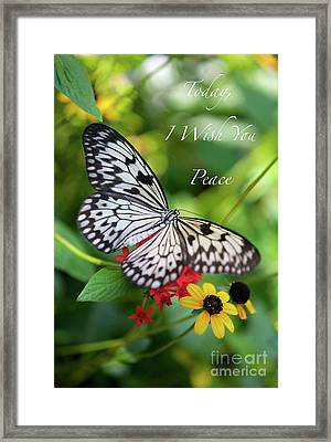 Peaceful Butterfly Card Or Poster Framed Print by Carol Groenen