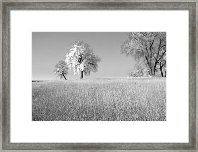 Peaceful Framed Print by James Steele
