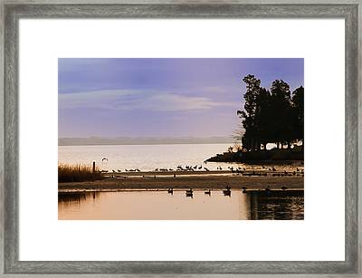 Peaceful Morning Framed Print by Bill Cannon