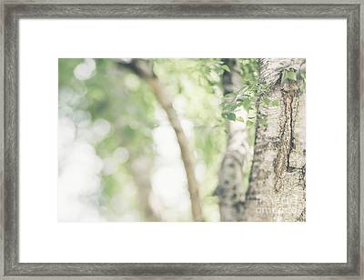 Peaceful Nature Framed Print by Natalie Kinnear