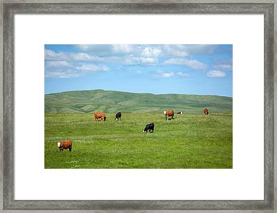 Peaceful Pasture Framed Print by Todd Klassy