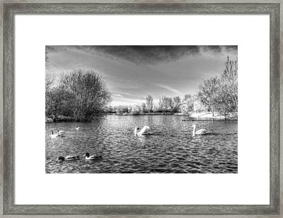 Peaceful Swan Lake Framed Print by David Pyatt