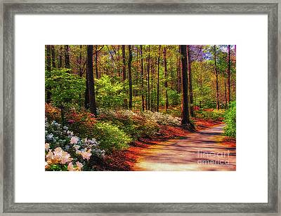 Peaceful Walk Framed Print by Geraldine DeBoer