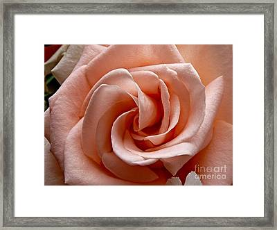Peach-colored Rose Framed Print by Sean Griffin