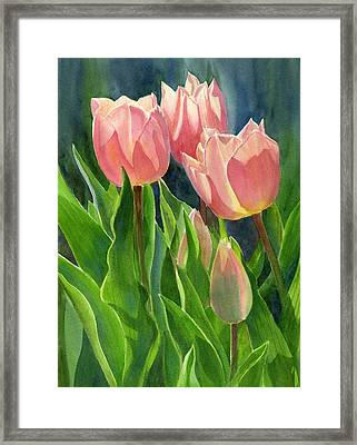 Peach Colored Tulips With Buds Framed Print by Sharon Freeman