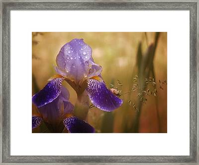 Peachy Iris Framed Print by Barbara St Jean