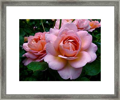Peachy Pink Framed Print by Rona Black