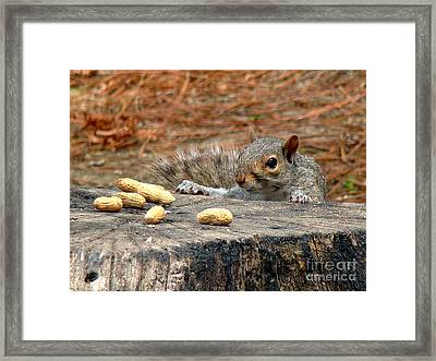 Peanut Surprise Framed Print by Sue Melvin