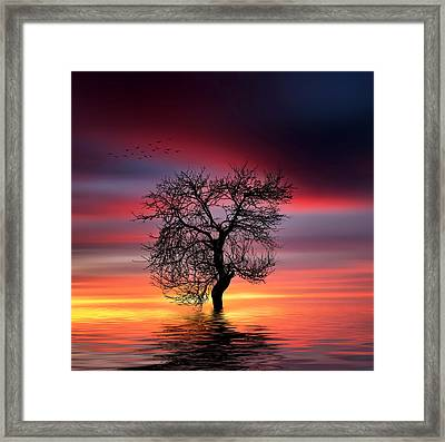 Pear On Lake Framed Print by Bess Hamiti