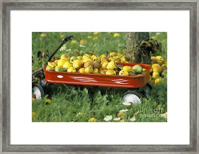 Pears In A Wagon Framed Print by Gordon Wood