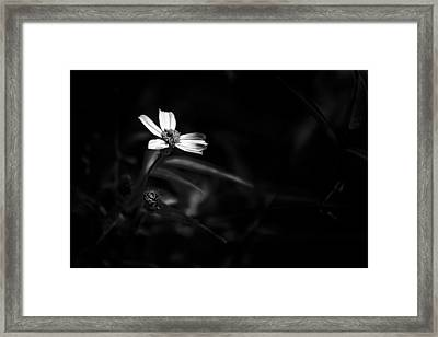 Peddling Slow Bw Framed Print by Marvin Spates
