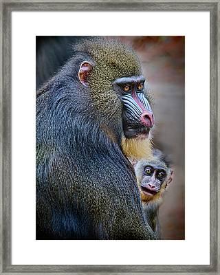 Peek-a-boo Framed Print by Laura M. Vear