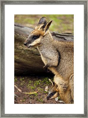 Peeking At The World Framed Print by Mike  Dawson