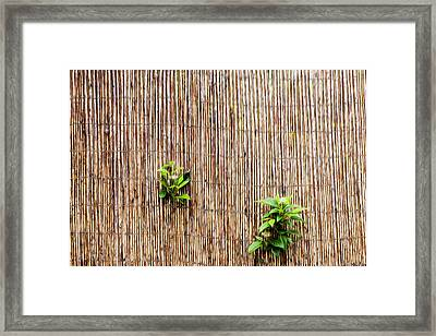 Peeping Through Framed Print by Motty Henoch