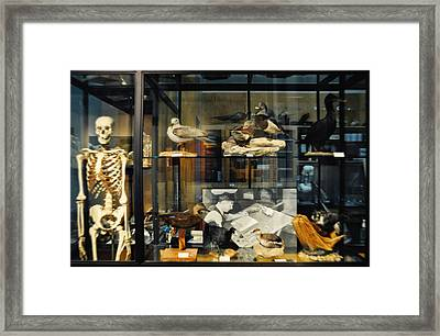 Peggy Notebaert Nature Museum Framed Print by Kyle Hanson