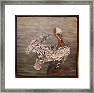 Pelican 3 Brown Framed Print by Judy Merrell