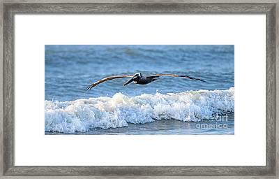 Pelican   3526 Framed Print by Jack Schultz